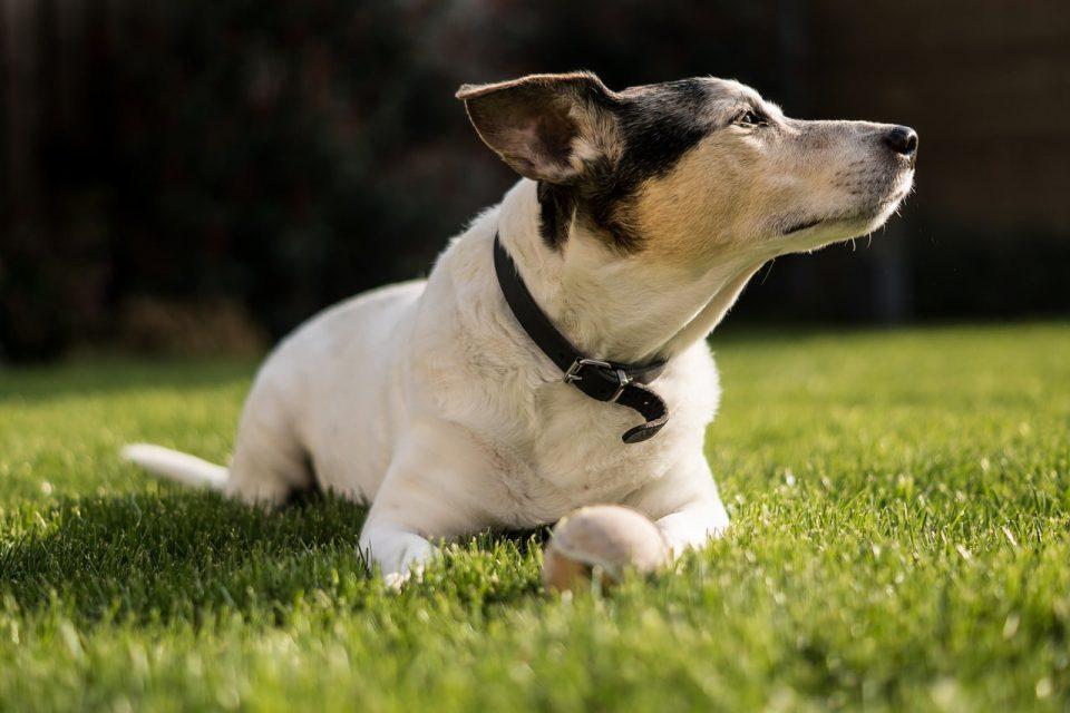 ile wynosi podatek od posiadania psa